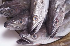 Young hake. A lot of young hakes  for cooking Stock Images