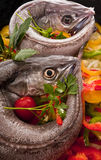 Young hake prepared for cooking with vegetables. European hake (Merluccius merluccius) being prepared for poaching, in white wine, in the oven on a bed of red Stock Photos