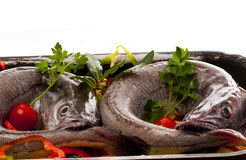 Young hake prepared for cooking with vegetables. European hake (Merluccius merluccius) being prepared for poaching, in white wine, in the oven on a bed of red Stock Images