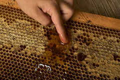 Young hand takes honey from a honeycomb Royalty Free Stock Photo