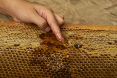 Young hand takes honey from a honeycomb Stock Photography