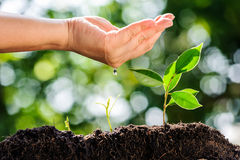 Young hand water drop on green plant growing on soil Stock Images