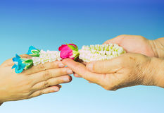Young hands give jasmine garland to the older isolated over blue gradient background. Royalty Free Stock Image