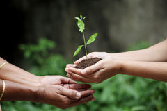 Young hands giving plant Stock Photo