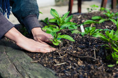 Young hands planting plant Royalty Free Stock Photos