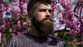 Young handsome bearded man with emotional face near bush lilac flower, closeup. Emotions and facial expxression. Spring. Man.Spring nature and vacation. Hipster stock footage