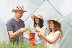 Young handsome farmers checking vegetable plants in a greenhouse stock photography