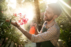 Young handsome gardener smiling, watering, taking care of flowers. Flare sunlight on background. Royalty Free Stock Photography