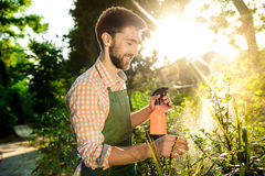 Young handsome gardener smiling, watering, taking care of plants. Flare sunlight on background. Stock Photos