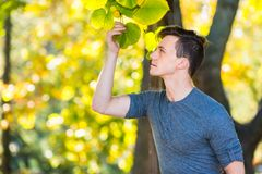 Golden Autumn Afternoon. A young handsome guy is interestedly looking at leaves in a golden autumn afternoon Royalty Free Stock Photo