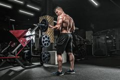 Young handsome male athlete bodybuilder weightlifter, doing exercises for the development of muscles of the biceps using sports e royalty free stock photo