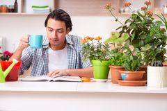 The young handsome man cultivating flowers at home. Young handsome man cultivating flowers at home royalty free stock images
