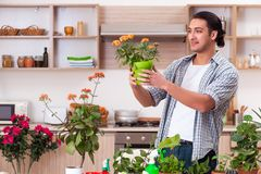 Young handsome man cultivating flowers at home. The young handsome man cultivating flowers at home stock photos