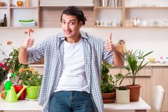 Young handsome man cultivating flowers at home. The young handsome man cultivating flowers at home royalty free stock photo