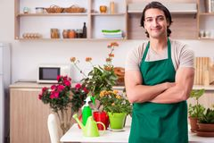Young handsome man cultivating flowers at home. The young handsome man cultivating flowers at home royalty free stock image