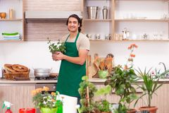 The young handsome man cultivating flowers at home. Young handsome man cultivating flowers at home royalty free stock photo