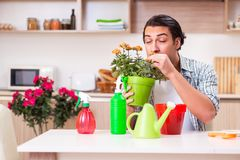 The young handsome man cultivating flowers at home. Young handsome man cultivating flowers at home stock image
