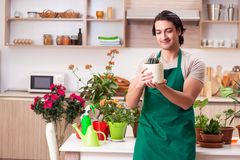 The young handsome man cultivating flowers at home. Young handsome man cultivating flowers at home royalty free stock photography