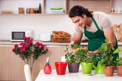 The young handsome man cultivating flowers at home. Young handsome man cultivating flowers at home stock photos