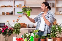 The young handsome man cultivating flowers at home. Young handsome man cultivating flowers at home stock images