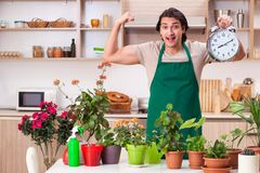 Young handsome man cultivating flowers at home. The young handsome man cultivating flowers at home royalty free stock photography