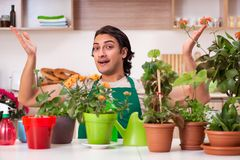 The young handsome man cultivating flowers at home. Young handsome man cultivating flowers at home royalty free stock photos