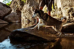 Young handsome man walking with huskies dog in canyon near water. Royalty Free Stock Images