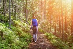 Young happy backpacker woman walking in woods royalty free stock photography