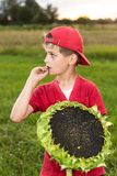 Young happy boy hold sunflower in a garden Royalty Free Stock Photos