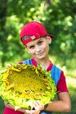 Young happy boy hold sunflower in a garden Stock Photography