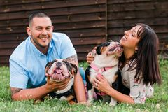 Young Happy Couple with English Bulldogs. A young, fashionable, engaged couple plays with two happy English Bulldogs royalty free stock image