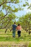 Couple Walking Through Apple Royalty Free Stock Photos