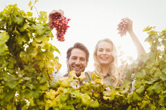 Young happy couple holding grapes Stock Photos