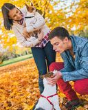 Young couple playing with dogs outdoors in autumn Royalty Free Stock Image