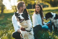 Free Young Happy Couple Playing With Dogs, Having Fun In Park Royalty Free Stock Photo - 204262985