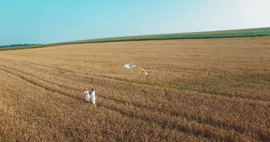 Young Happy Couple In Rural Wheat Field stock footage