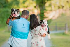 Young Happy Couple walking and carrying English Bulldogs. A young, fashionable, engaged couple walks while carrying two happy English Bulldogs royalty free stock images