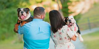 Young Happy Couple walking and carrying English Bulldogs. A young, fashionable, engaged couple walks while carrying two happy English Bulldogs stock photography