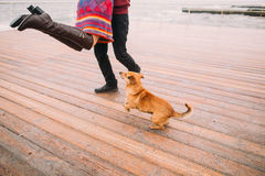 Young happy couple walking with dog and having fun on the rainy berth in autumn. Sea background stock photos