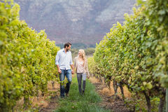 Young happy couple walking next to each other while holding hands. In the grape fields Stock Images