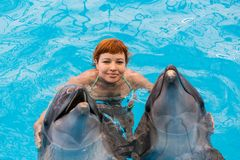 Young happy girl hugs with dolphin. In swimming pool royalty free stock image
