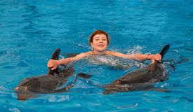 Young happy girl swimming with dolphin. In swimming pool stock photography