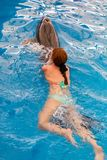 Young happy girl swimming with dolphin. In swimming pool royalty free stock photography