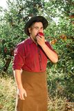 Man garden collect ripe apples hat green red proprietor worker owner harvest. Young happy man in the garden collect ripe apples. The man is eating an apple royalty free stock images
