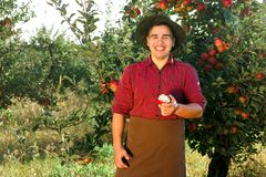 Man garden collect ripe apples hat green red proprietor worker owner harvest. Young happy man in the garden collect ripe apples. The man is eating an apple stock photography