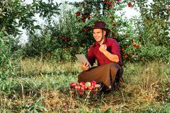 Man garden collect ripe apples hat green red proprietor worker owner harvest. Young happy man in the garden collect ripe apples. The owner of apple orchard is royalty free stock photography