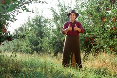 Man garden collect ripe apples hat green red proprietor worker owner harvest. Young happy man in the garden collect ripe apples. The owner of apple orchard is royalty free stock photos