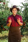 Man garden collect ripe apples hat green red proprietor worker owner harvest. Young happy man in the garden collect ripe apples. The owner is pleased with the royalty free stock image