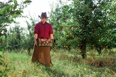 Man garden collect ripe apples hat green red proprietor worker owner harvest. Young happy man in the garden collect ripe apples. A worker in the garden with a royalty free stock images