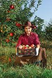 Man garden collect ripe apples hat green red proprietor worker owner harvest box basket. Young happy man in the garden collect ripe apples. A worker in the royalty free stock image